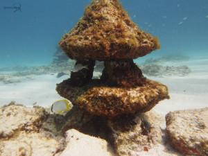 diving bio mapa cancun