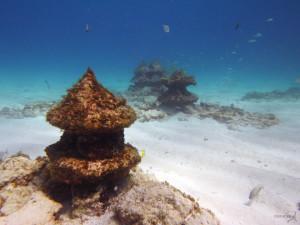 diving bio mapa isla mujeres