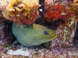 diving with moray eel isla mujeres
