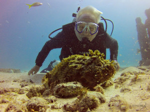 diving with a scorpion fish musa