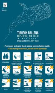 whale shark rules isla mujeres